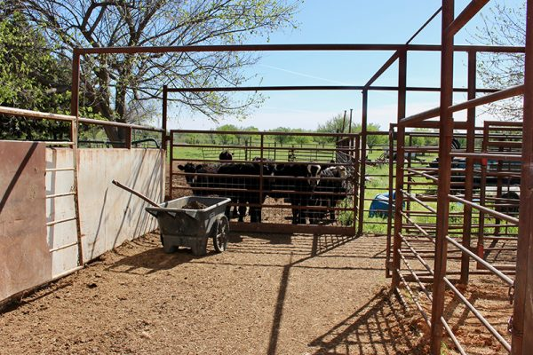 The alley to the cattle chute that's outside and the cattle storage area