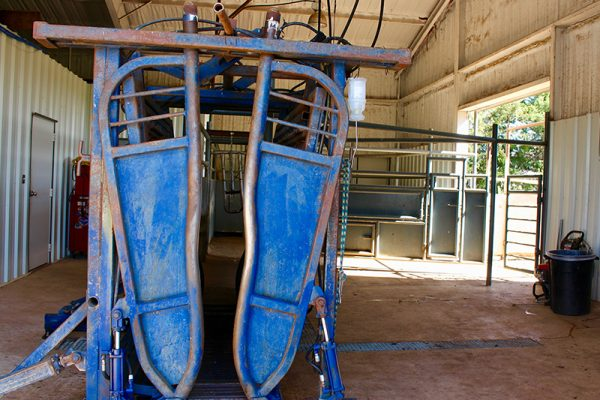 The hydraulic squeeze cattle chute