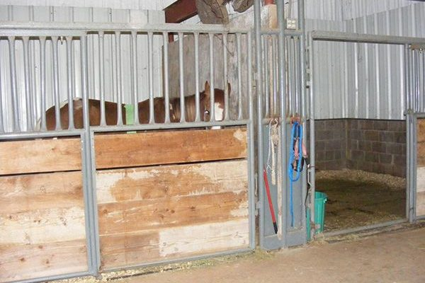 stalls in the large animal facility